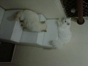 gatos na escada