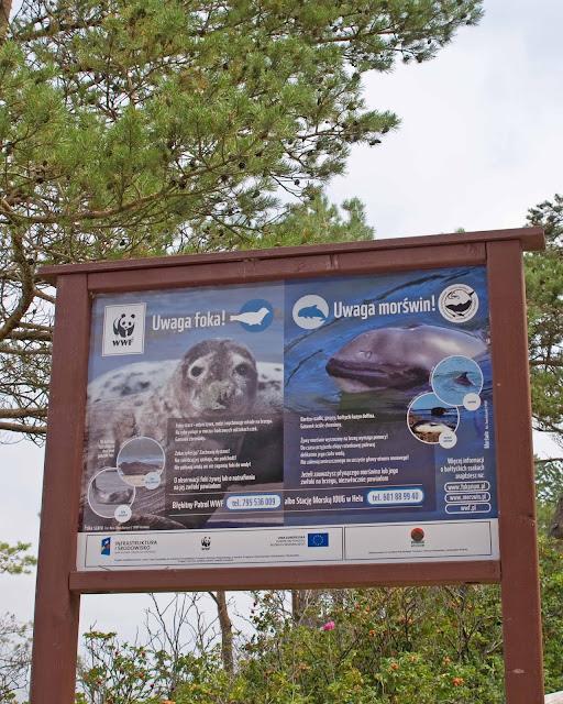Mrzeżyno foki, morświn tablica informująca o występowaniu gatunku
