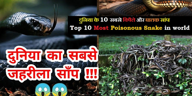 दुनिया के 10 सबसे विषैले और घातक सांप Top 10 Most Poisonous Snake in world