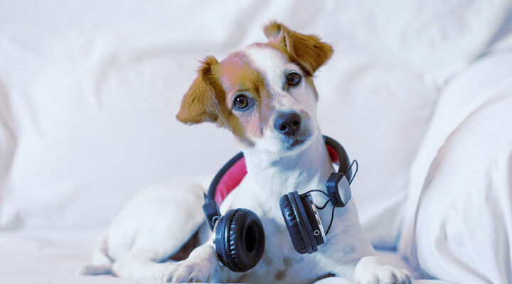 Top 10 Best Classical Music For Dogs To Relax- Free Download