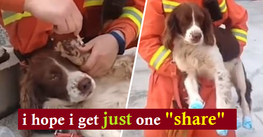 Dog Hailed a Hero After Saving Six People Trapped Under a Collapsed Hotel