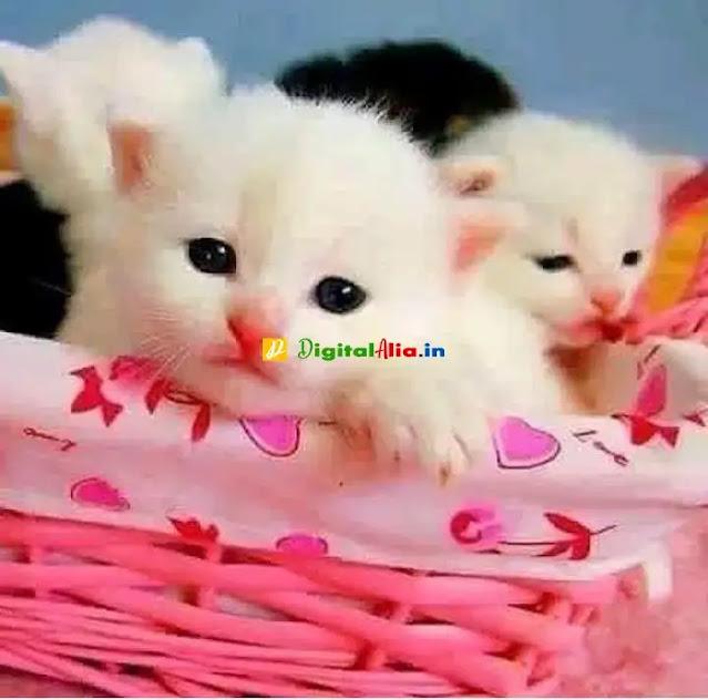 so sweet dp for whatsapp, sweet dp couple, whatsapp dp, cute and sweet dp for whatsapp, best dp for whatsapp, cute dp for whatsapp, sweet images for whatsapp profile hd, best dp for whatsapp, attractive whatsapp dp, beautiful dp for whatsapp profile, funny cute dp for whatsapp, best cute dp for whatsapp, cute dp for whatsapp girl, so cute dp for whatsapp, best dp pics, dp for whatsapp profile, latest dp images, dp ke liye photo, best dp for whatsapp, beautiful profile picture, dp pics for whatsapp, best whatsapp dp for boys