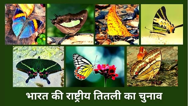 भारत की राष्ट्रीय तितली का चुनाव | Election of India's National Butterfly |