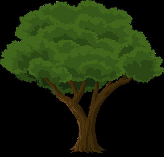Fungsi Batang Bagi Tumbuhan