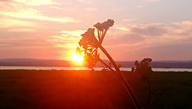 Sunset over the river with a silhouette of cow parsley in foreground