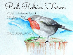 Julia's Red Robin