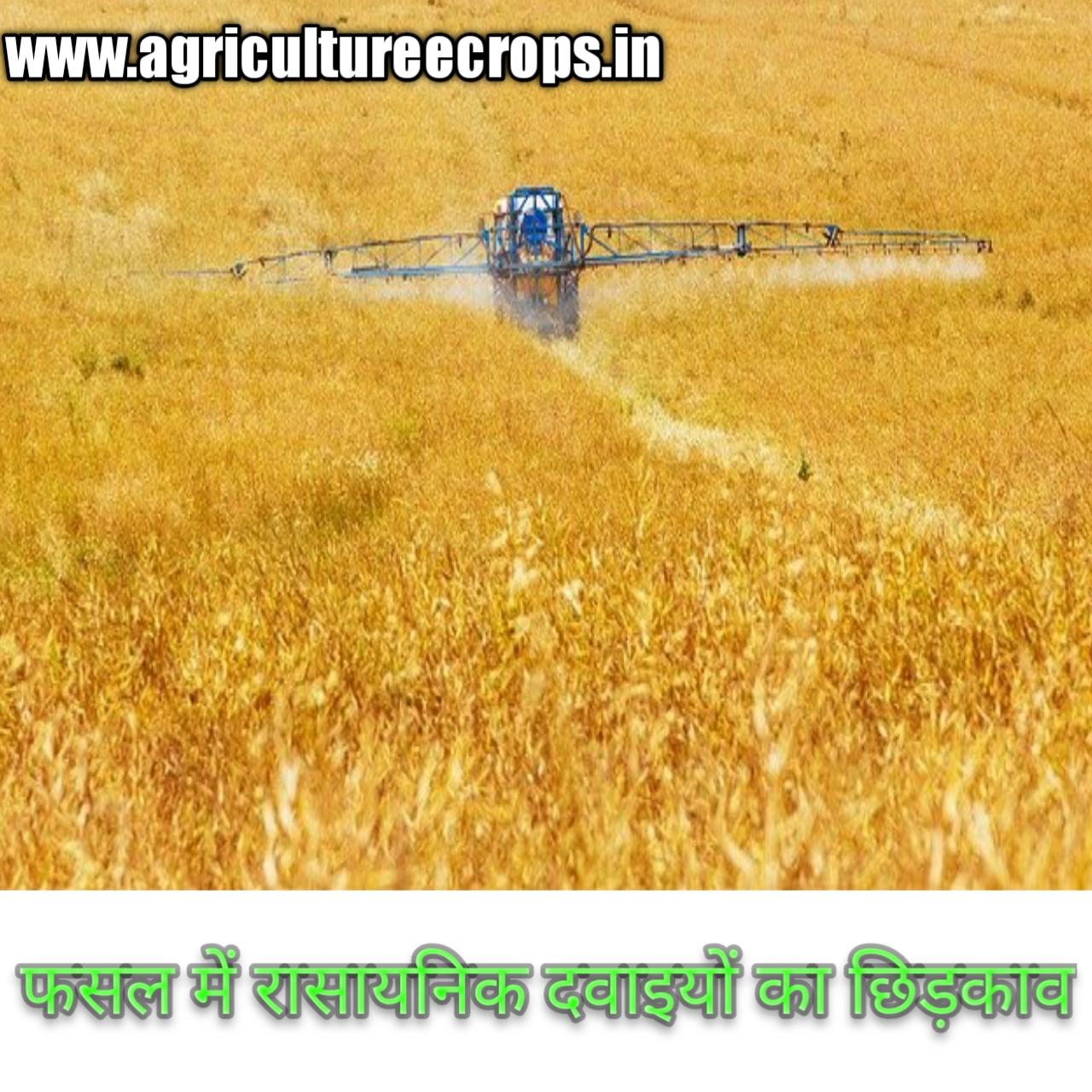 फसल में कीटनाशकों का प्रयोग करते समय इन बातों का रखें ध्यान । Keep these things in mind when using pesticides in crops
