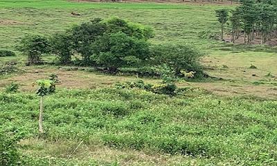 1.4 mẫu đất gần cổng bán vé khu du lịch núi chứa chan Gia Lào