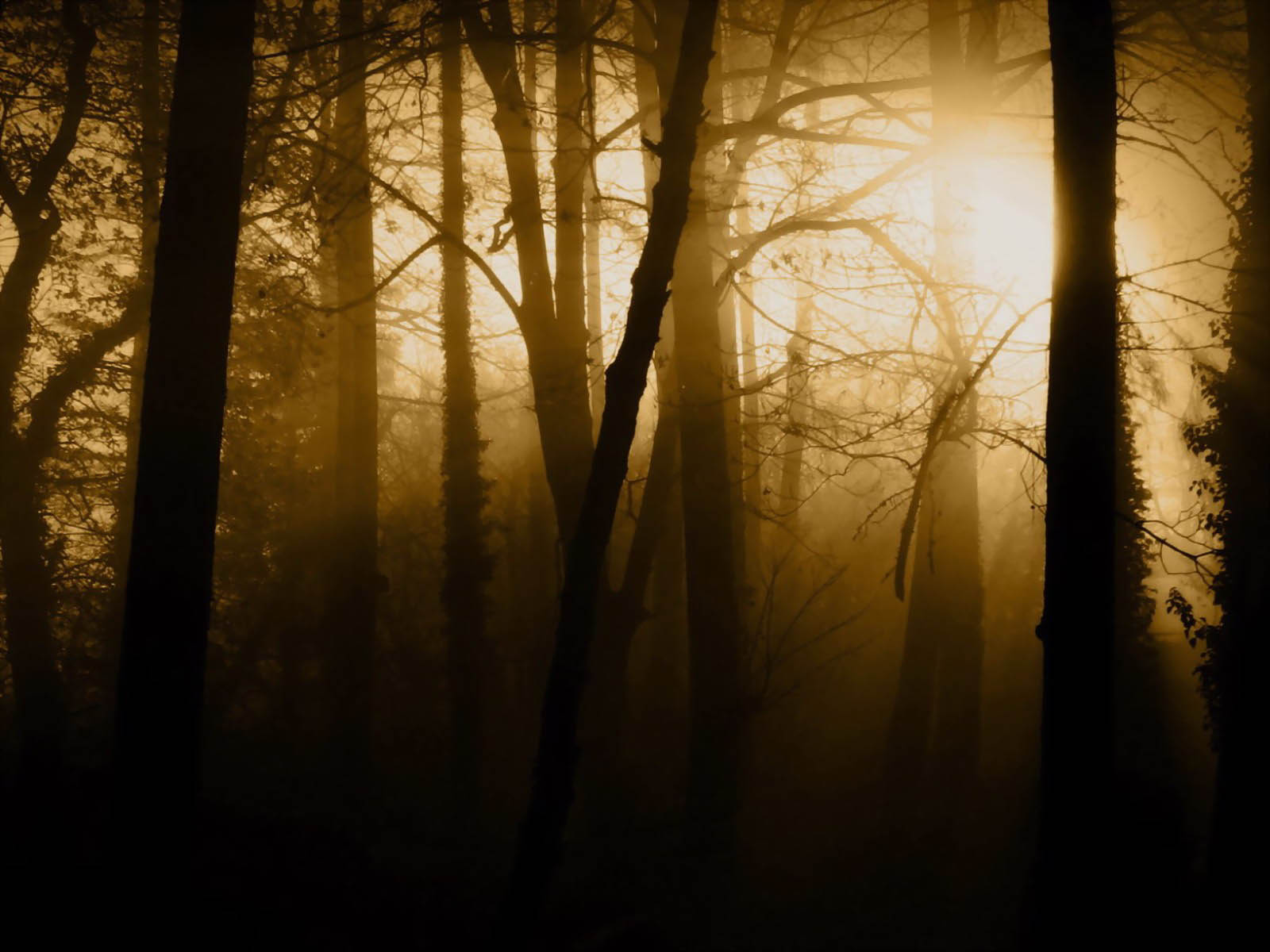 Download Free 3d Wallpapers For Windows 8 Wallpapers Twilight Forest