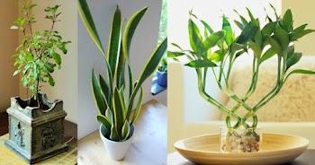 जानिये राशि के हिसाब से कौन से पौधे लगाने चाहिए ?
