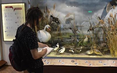 Μεγάλη έρευνα κοινού πραγματοποίησε το Μουσείο Φυσικής Ιστορίας Μετεώρων
