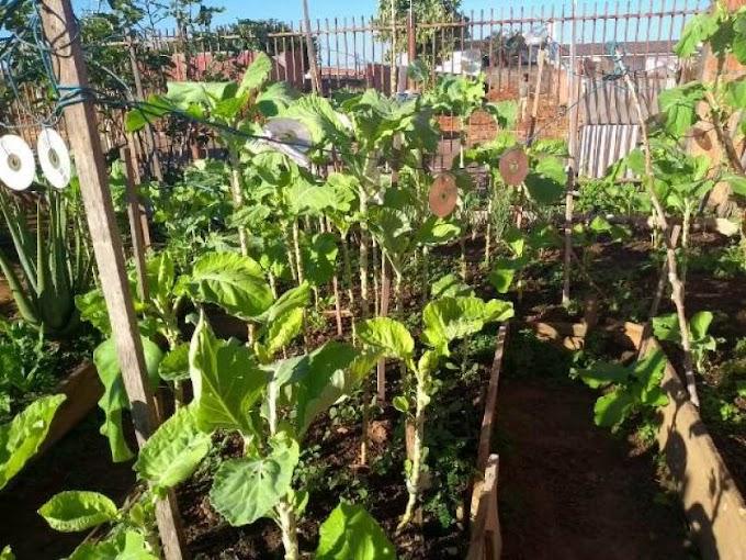 Vilhenense encontra em cultivo de horta, distração, economia e renda extra em meio à pandemia