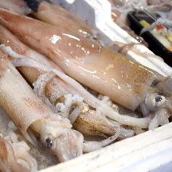 माकूळ, Squid fish name in Marathi