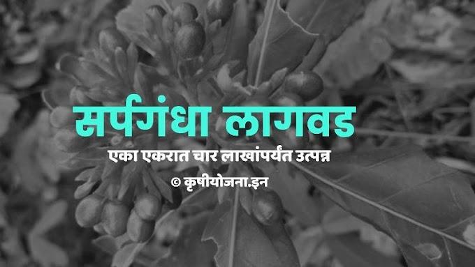 या औषधी वनस्पतीची लागवड करा : एका एकरात चार लाखांपर्यंत उत्पन्न