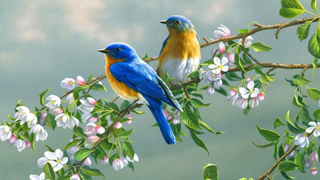 طيور,الطيور,اغرب 10 طيور في العالم,غرائب,حيوانات,معلومات,اغرب طائر في العالم,اغرب 10 اشياء في العالم,اغرب الطيور الجارحة,انواع الطيور,وثائقي,اغرب انواع الطيور,أغرب,أغرب 10,سبحان الله,طيور جميلة,اغرب طيور العالم,طائر البيتا,أغرب طيور العالم