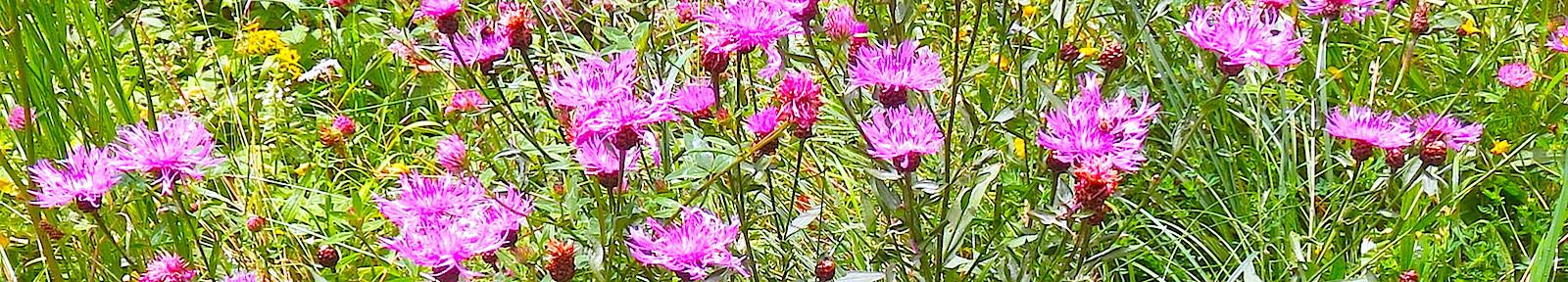 Цветы Емилиану Требийскому.