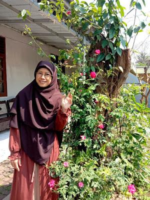 Bunga Mawar Kampung di halaman rumahku