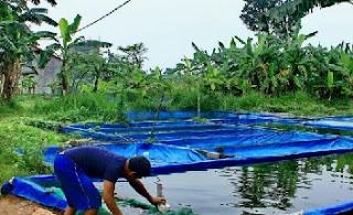 budidaya ikan patin di kolam terpal,resensi budidaya ikan patin di kolam terpal,cara budidaya ikan patin agar cepat besar,analisa budidaya ikan patin di kolam terpal,ternak ikan patin di kolam terpal,