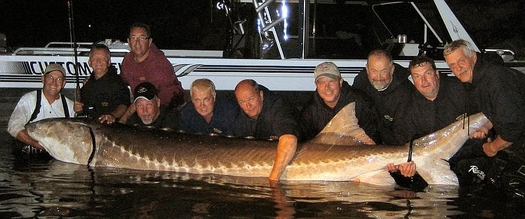 Mondo pesca news usa storione piu grande del mondo for Grosso pesce di lago