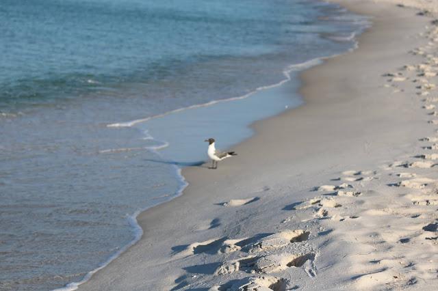 rosemary beach, vacation, gulf, coast, Summer, athomewithjemma.co