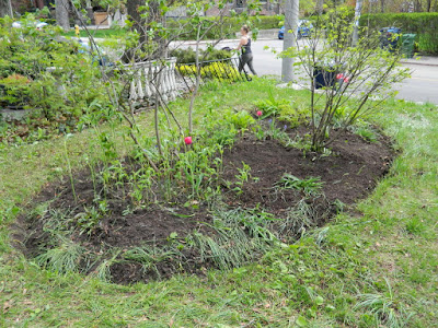 Riverdale Front Garden Spring Cleanup After by Paul Jung Gardening Services--a Toronto Gardening Company