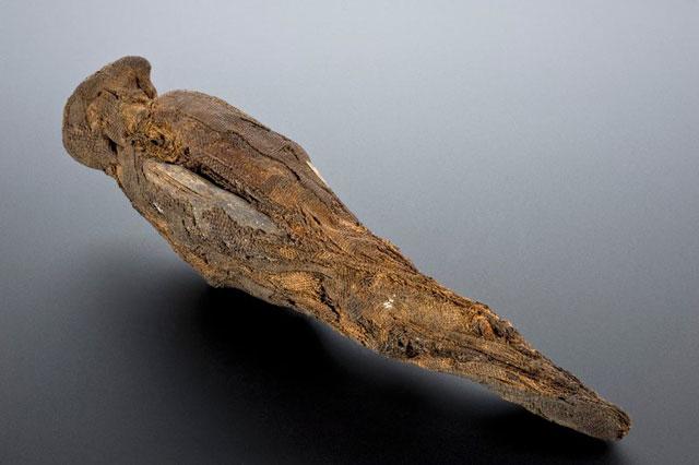 mumi burung mesir kuno