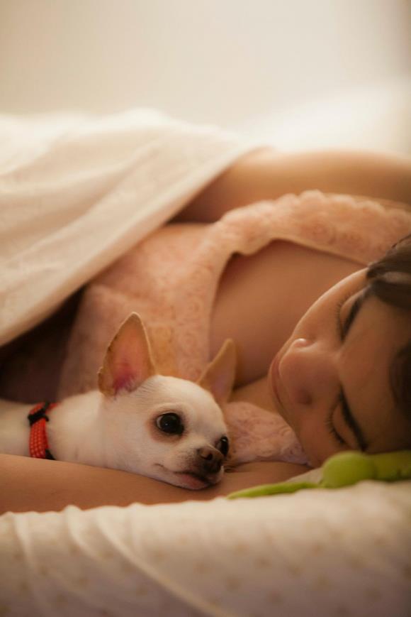 Buat Yang Cinta Kucing Ama Anjing Nih Foto Mereka Yang Lucu Lucu Banget Apa Lagi Kalau Pas Lihat Wajah Polos Mereka Waktu Tiduran Berasa Pengen Di Peluk