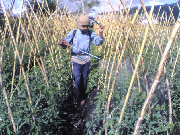 Teknik Penyemprotan Pestisida Potret Pertanian Sahabat Dimanapun Saudara Berada Bapak