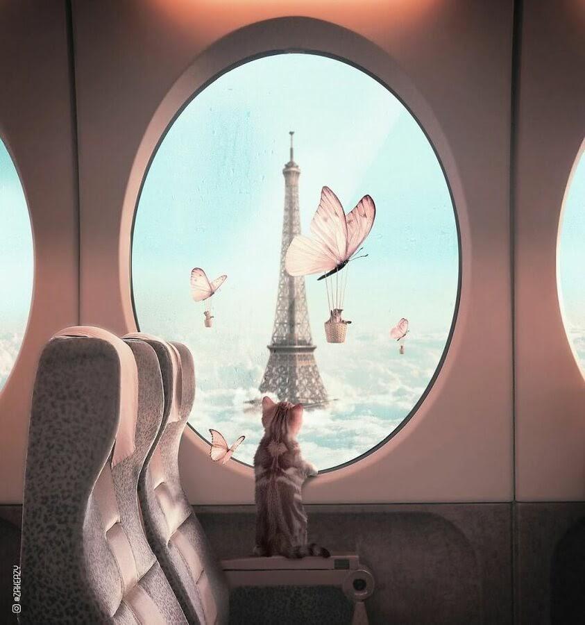 01-Paris-France-cat-Zak-Eazy-www-designstack-co