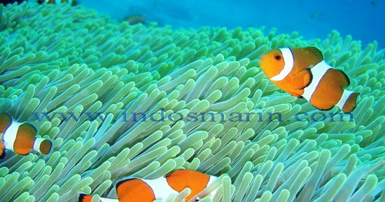 1001 Gambar Keren Gambar Nemo