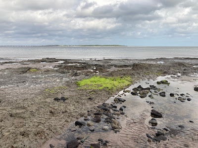 Sea shore with tidal pools and a bright patch of green algae.