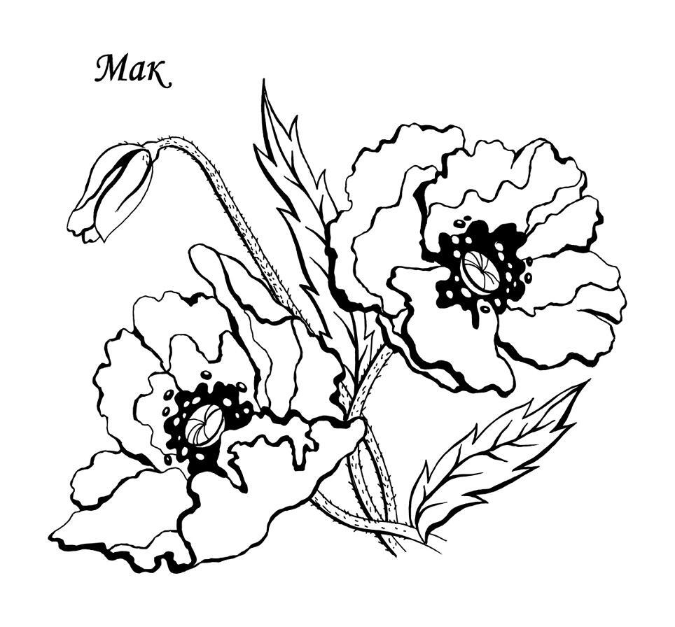 Раскраски деткам: Раскраски цветы