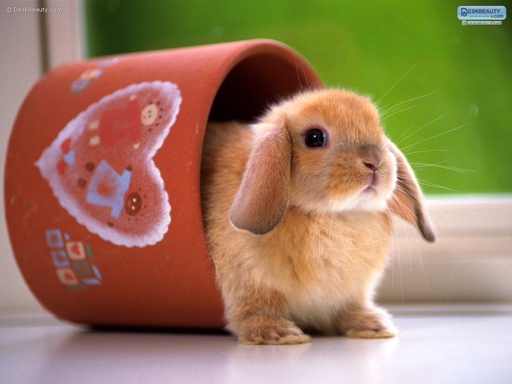 Cute Rabbits In...