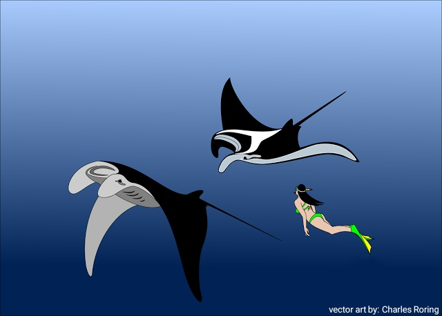 vector art of swimming with manta
