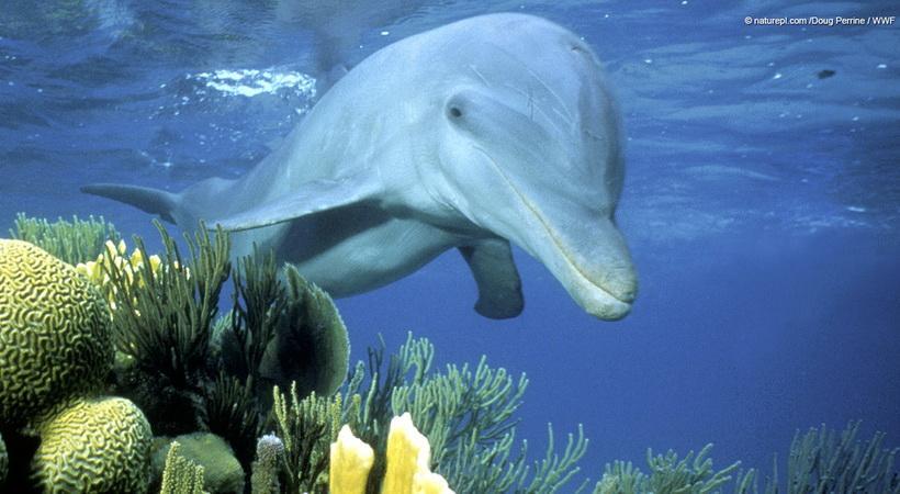 Θαλάσσια θηλαστικά, οι συγκάτοικοί μας στις ελληνικές θάλασσες