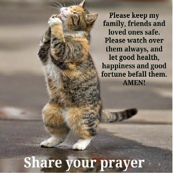 Funny Cat Sayings Quotes: Pets N More: Top Cat Quotes