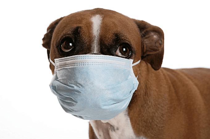 kucing dan anjing mimisan tidak normal untuk kesehatan mereka