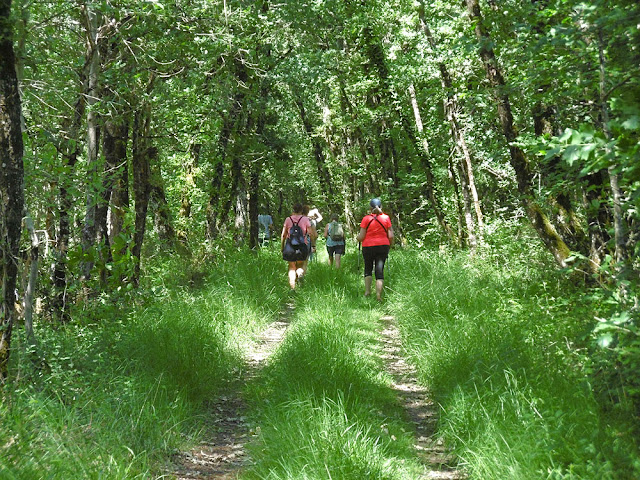 Walkers on a shaded trail.  Indre et Loire, France. Photographed by Susan Walter. Tour the Loire Valley with a classic car and a private guide.