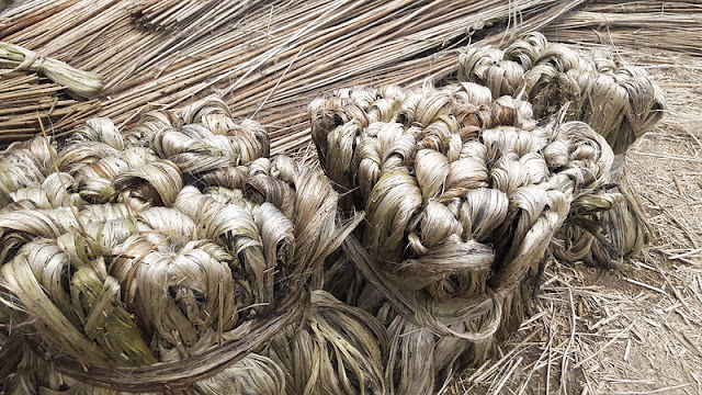 Top10 largest Agriculture Producing India jute