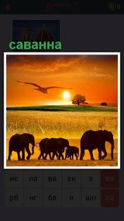 в саванне бродят животные слоны и птицы, наступил закат