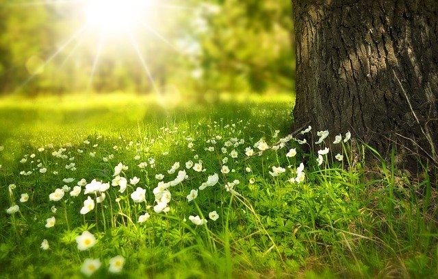 Gambar Background Bunga