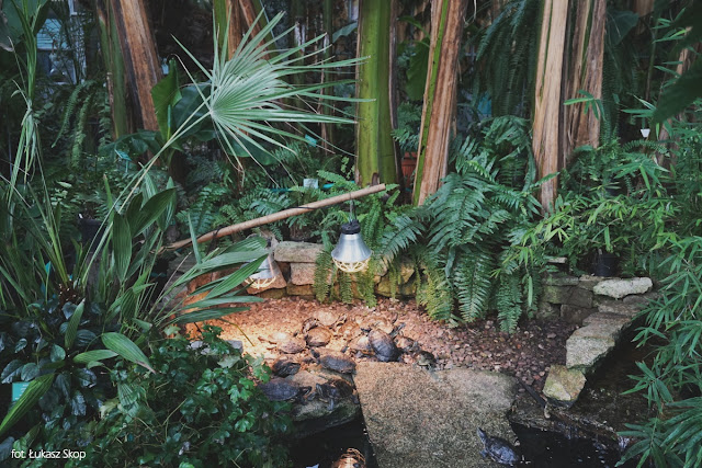 zwierzęta w palmiarni