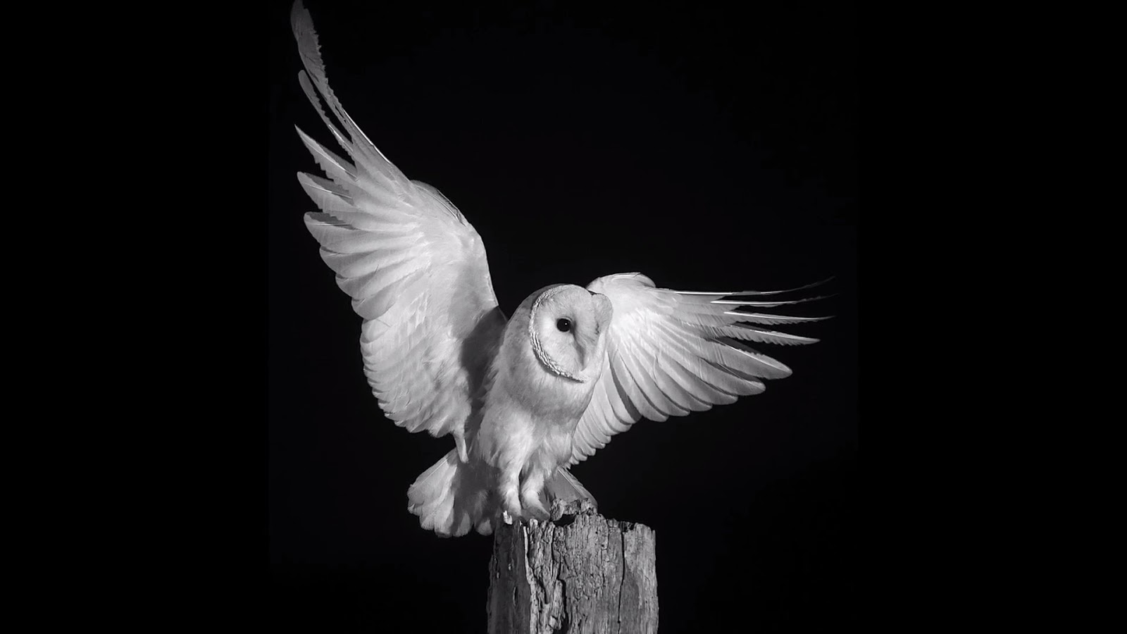 Photographing Owls at Night in Infrared