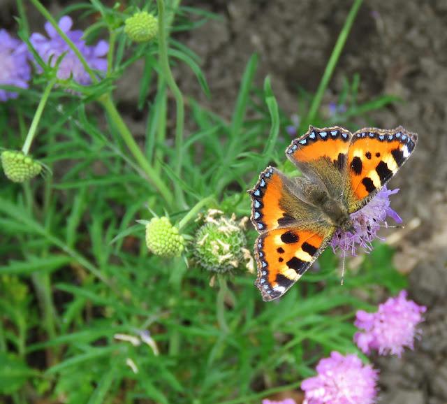 Nærbilde av sommerfugl i Lotties Trädgård. Trädgårdsrundorna i Helsingborg.