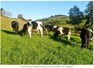 Agronegócio catarinense sente os efeitos da estiagem