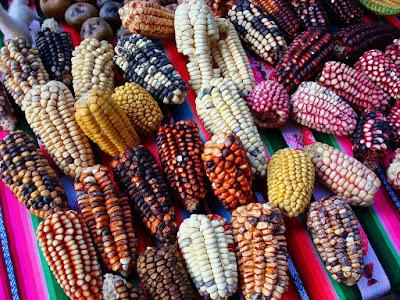 Domesticación maíz