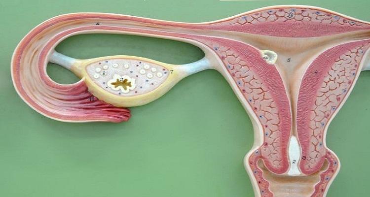 فوائد السائل المنوي في جسم المرأة - دراسات علمية