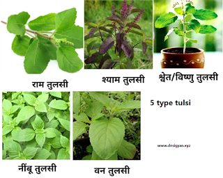 This 5 types of basil