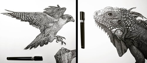00-Animal-Drawings-Carole-Levy-www-designstack-co