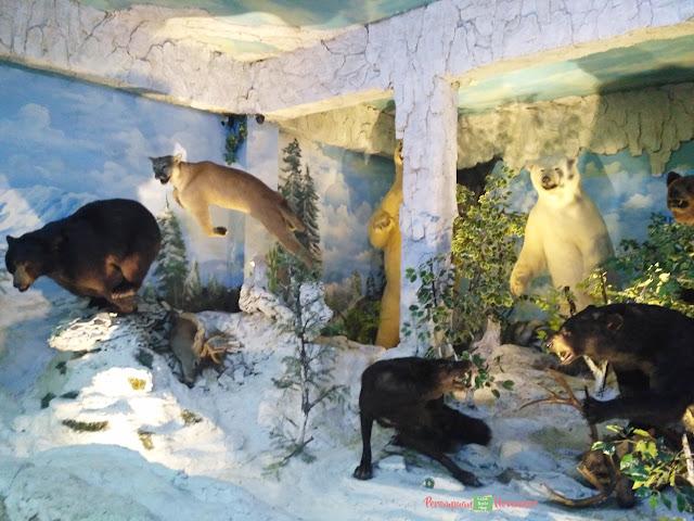 rahmat shah museum galeri